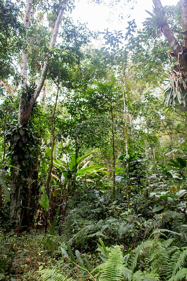 The Amazon rainforest is one of Brazil's largest geographic areas and most valuable resources.